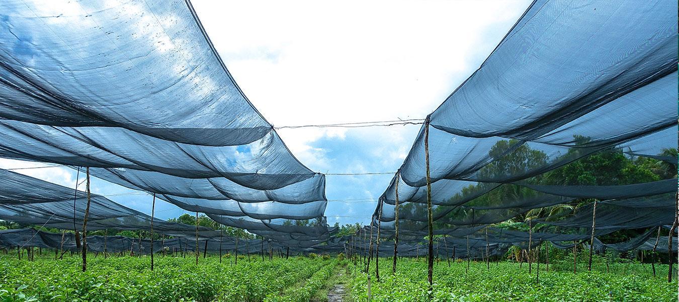 Lưới che nắng bán ở đâu đảm bảo chất lượng cao, giá thành rẻ?